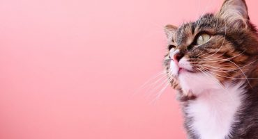 Benefícios_e_Cuidados_com_Pets